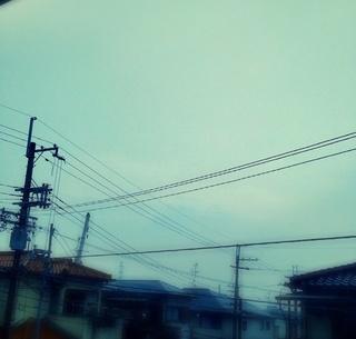 IMG_8799.jpg